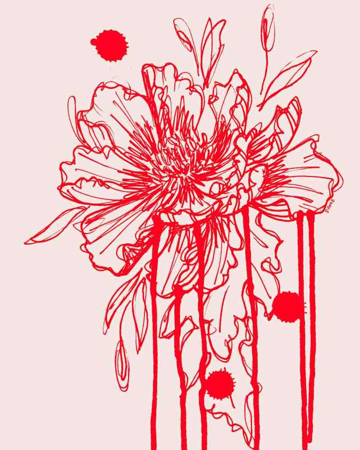 Ink drawing of a peony in red with pink background.